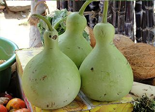 Bottle-gourd (Oops! image not found)