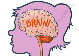 Brain (Oops! image not found)