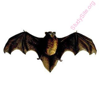 bat (Oops! image not found)