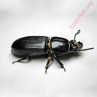 beetle (Oops! image not found)