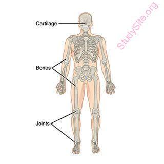 English to Punjabi Dictionary - Meaning of Bone in Punjabi is