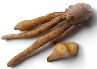 Chinese-ginger (Oops! image not found)