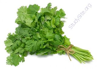 Cilantro (Oops! image not found)