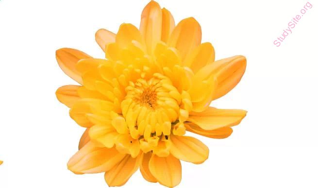 English To Kannada Dictionary Meaning Of Dahlia In Kannada Is ಡ ಲ ಯ
