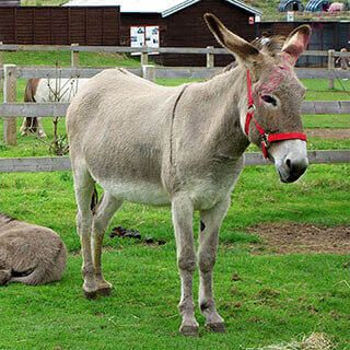 donkey (Oops! image not found)