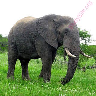 elephant (Oops! image not found)