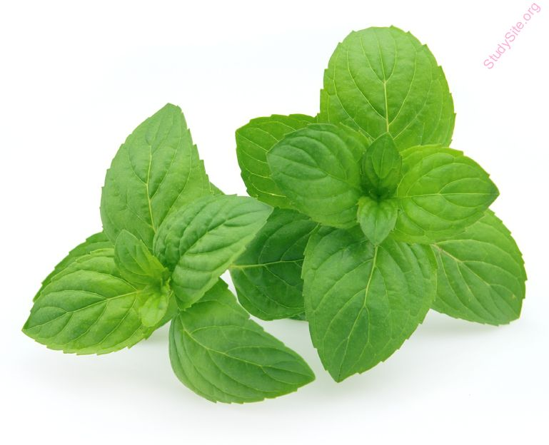 fresh-mint (Oops! image not found)