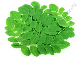 Moringa (Oops! image not found)