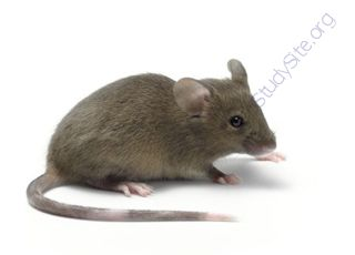 Mouse (Oops! image not found)