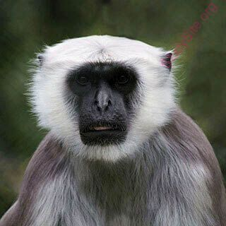 monkey (Oops! image not found)