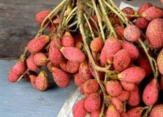 Nephelium-litchi (Oops! image not found)