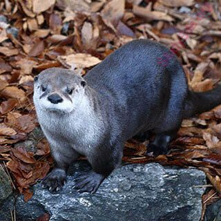 otter (Oops! image not found)