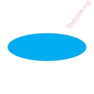 English To Punjabi Dictionary Meaning Of Oval In Punjabi Is ਓਵਲ