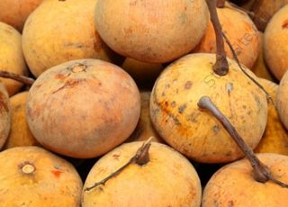 Santol (Oops! image not found)