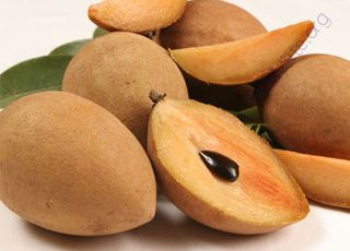Sapodilla (Oops! image not found)
