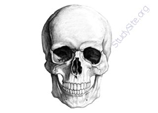 Skull (Oops! image not found)
