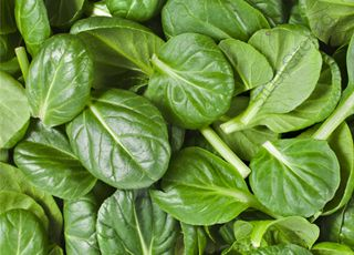 Spinach (Oops! image not found)