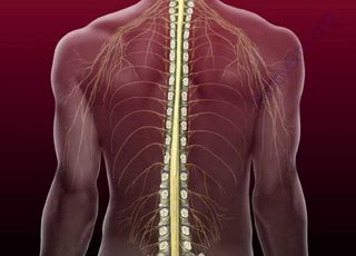 Spinal-Column (Oops! image not found)