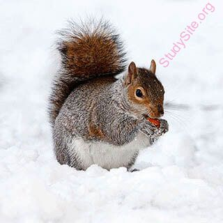 squirrel (Oops! image not found)