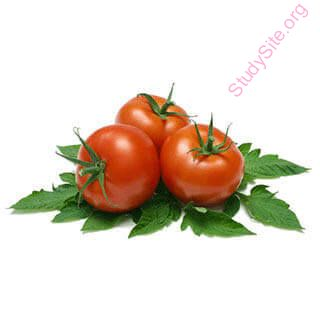 English to Kannada Dictionary - Meaning of Tomato in Kannada