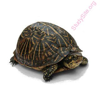 turtle (Oops! image not found)